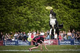 Fotografia psow K9ACTION fotografia psów canine photography dog photography Hundefotografie hondenfotografie Łódź Polska Nikon zdjęcia portretowe sportowe action sport portrait